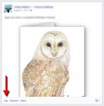 Owl Facebook